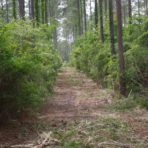 Moultrie Forestry Mowing Moultrie Dirt Hauling Bush